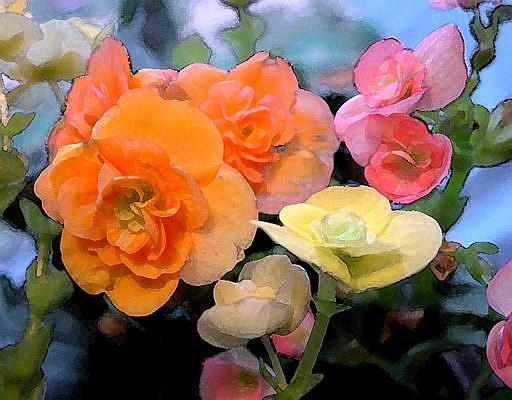 Art: Begonias by Artist Laurie Justus Pace