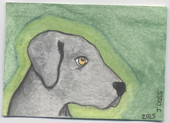 Art: Weim Pup by Artist Jenny Doss