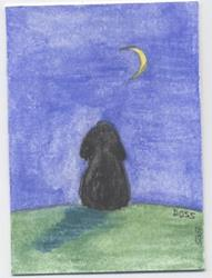 Art: Angus at Night ACEO by Artist Jenny Doss