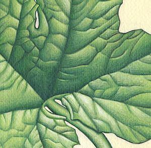 Detail Image for art Pumpkin Leaf