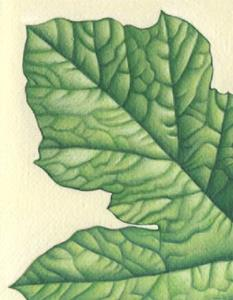 Detail Image for art Pumpkin Leaf