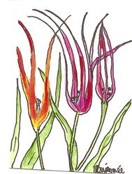 Art: Turkish Tulips original painting ACEO by Artist Nancy Denommee