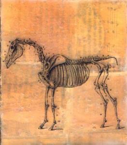 Detail Image for art Equus