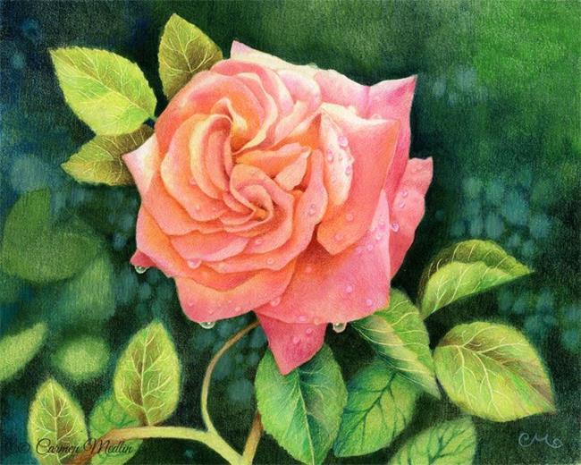 Art: Morning Dew Rose - Available by Artist Carmen Medlin