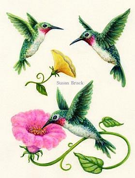 Art: HUMMINGBIRDS YELLOW PINK Flipped Right by Artist Susan Brack