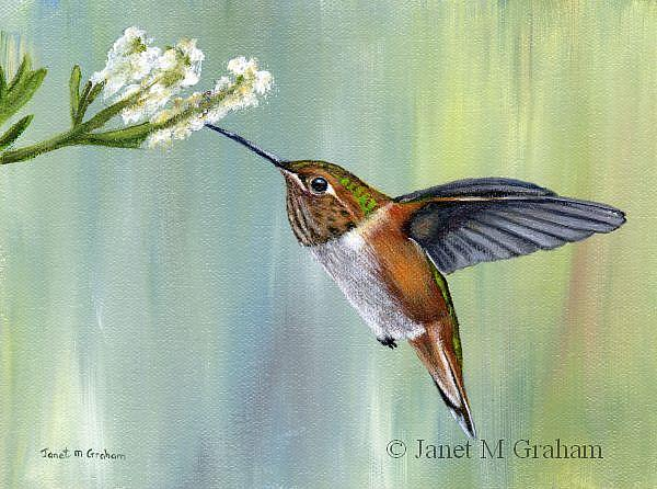 Art: Hummingbird by Artist Janet M Graham