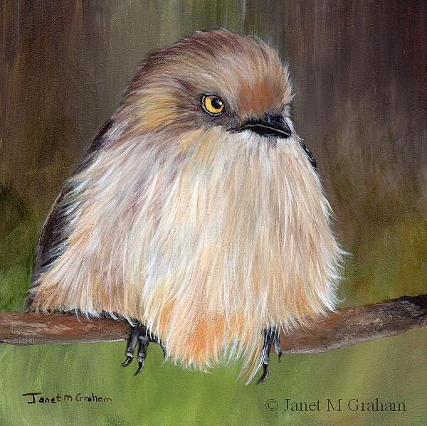 Art: Bushtit by Artist Janet M Graham