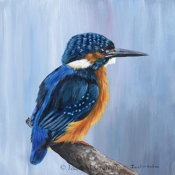 Art: Kingfisher by Artist Janet M Graham