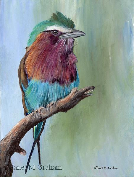 Art: Lilac Breasted Roller by Artist Janet M Graham