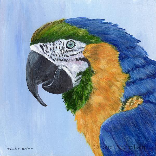 Art: Macaw by Artist Janet M Graham