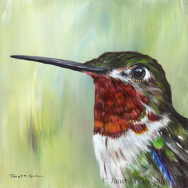 Art: Broad Tailed Hummingbird by Artist Janet M Graham