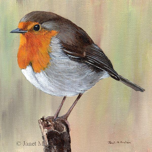 Art: Robin by Artist Janet M Graham