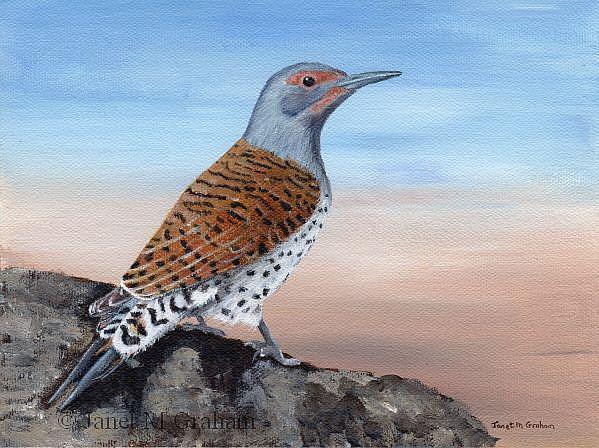 Art: Northern Flicker by Artist Janet M Graham