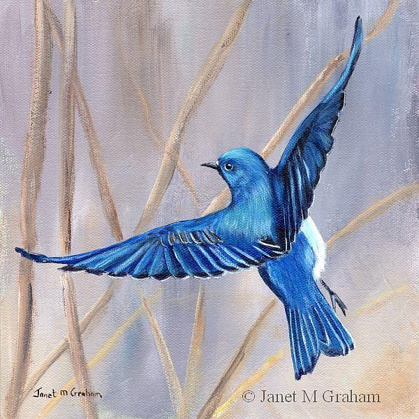 Art: Mountain Bluebird by Artist Janet M Graham