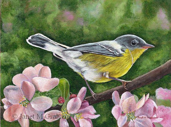 Art: Magnolia Warbler by Artist Janet M Graham