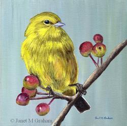 Art: Yellow Warbler by Artist Janet M Graham