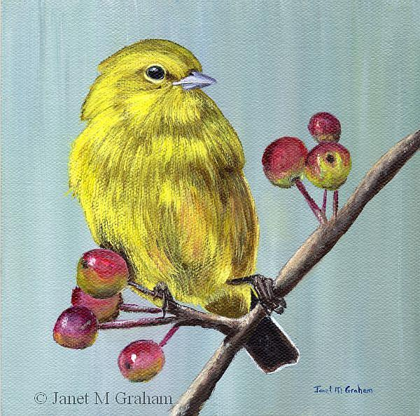 Art: Yellow Warbler by Artist Janet M Graham