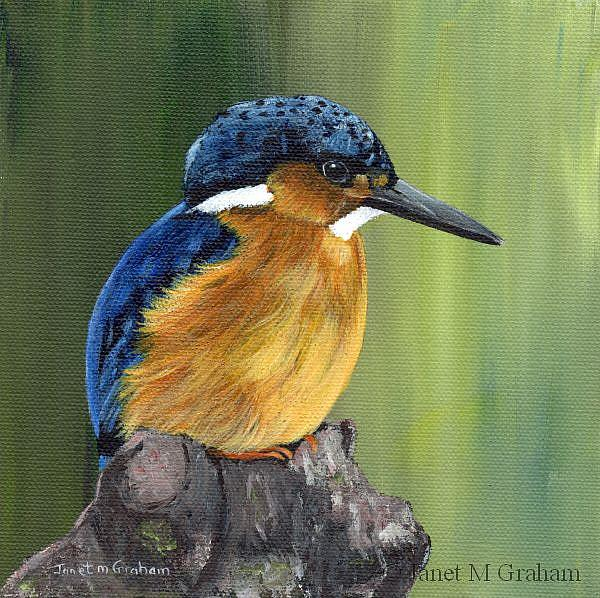 Art: Malagasy Kingfisher by Artist Janet M Graham