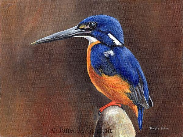 Art: Azure Kingfisher by Artist Janet M Graham
