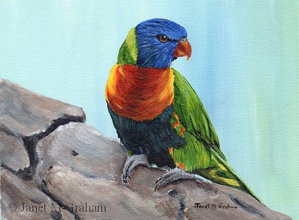 Art: Rainbow Lorikeet by Artist Janet M Graham