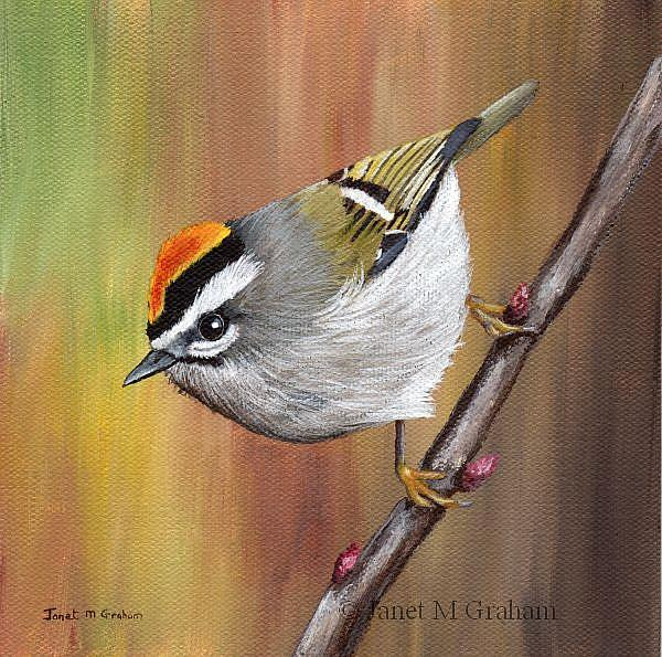 Art: Golden Crowned Kinglet by Artist Janet M Graham