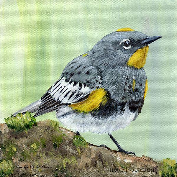 Art: Yellow Rumped Warbler by Artist Janet M Graham