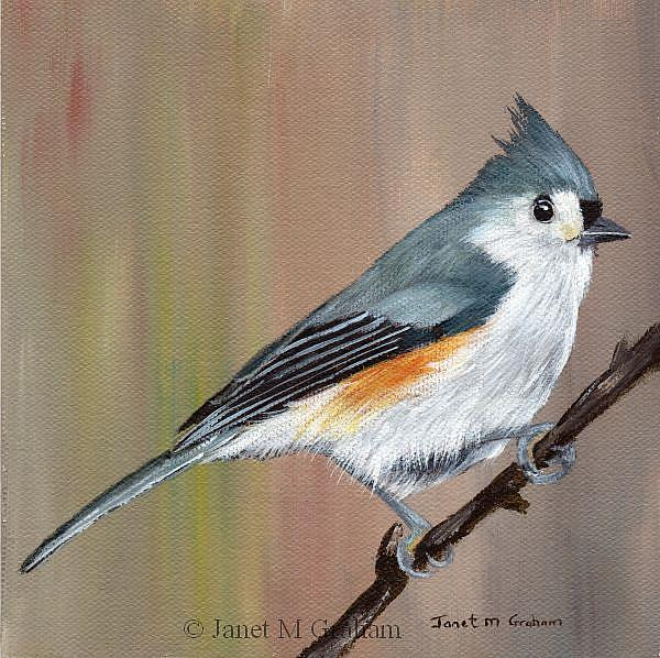 Art: Tufted Titmouse by Artist Janet M Graham