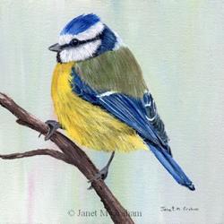 Art: Blue Tit by Artist Janet M Graham