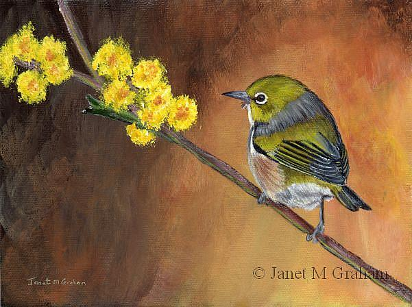 Art: Silvereye by Artist Janet M Graham