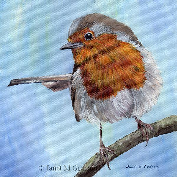 Art: Robin 6 by Artist Janet M Graham