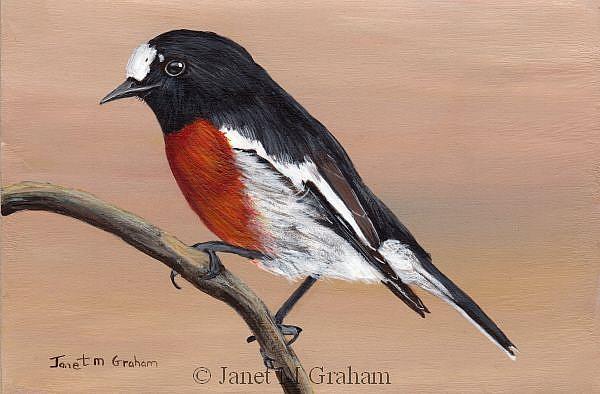 Art: Scarlet Robin by Artist Janet M Graham