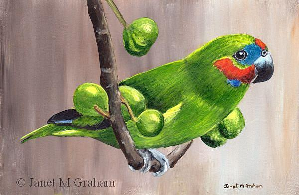Art: Double Eyed Fig Parrot by Artist Janet M Graham