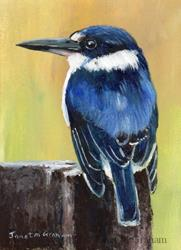 Art: Forest Kingfisher ACEO by Artist Janet M Graham