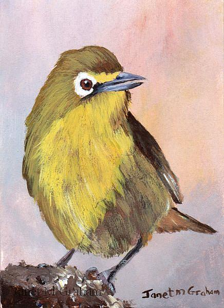 Art: Cape White Eye ACEO by Artist Janet M Graham