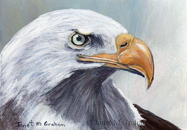 Art: Bald Eagle ACEO by Artist Janet M Graham