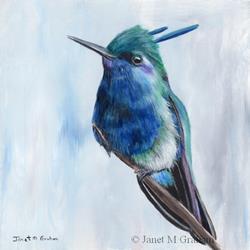 Art: Plovercrest by Artist Janet M Graham