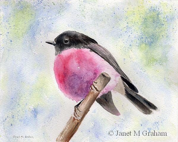 Art: Pink Robin by Artist Janet M Graham