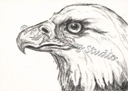 Art: Charcoal Eagle by Artist Kim Loberg