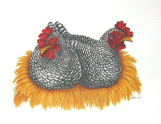 Art: Two Plymouth Hens (SOLD) by Artist Jackie K. Hixon