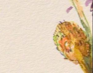 Detail Image for art Allium