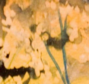 Detail Image for art Queen Anns Lace No 2