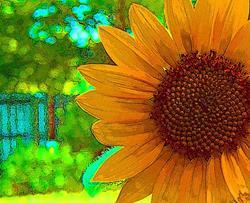 Art: Backyard Sunflower 3 by Artist Joan Hall Johnston