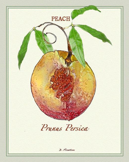 Art: Peach 2 by Artist Deanne Flouton