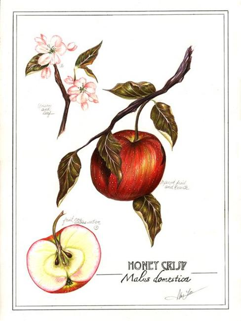 Art: Botanical Apple by Artist Alma Lee