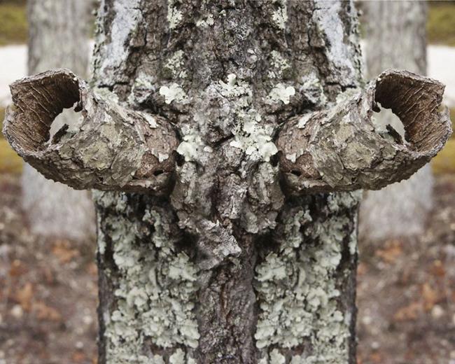 Art: Tree Horns by Artist Deanne Flouton