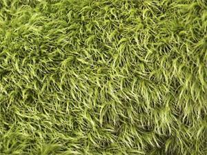 Detail Image for art Fuzzy Wuzzy