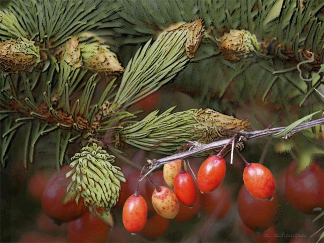Art: Pine and Berries 2 by Artist Deanne Flouton