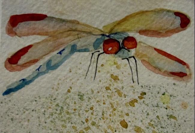 Art: Aqua Dragonfly Aceo by Artist Delilah Smith