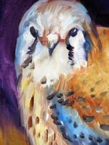 Detail Image for art RED TAIL HAWK STUDY