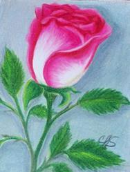 Art: Magenta Rose by Artist christi lynn schwartzkopf